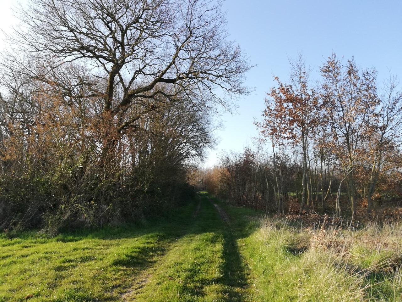 chemin Bournezeau